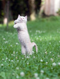 Kitten jumping and playing Stock Photo