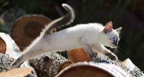 Kitten jumping. Kitten sneaking on to the firewood production Royalty Free Stock Image
