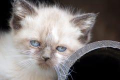 Kitten. Just looking Stock Image