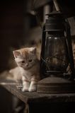 Kitten and the kerosene lamp stock images