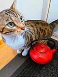 Kitten and the kettle stock photos