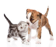 Kitten kissing puppy.  on white background Royalty Free Stock Image