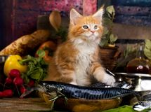 Kitten and fish fresh in the kitchen royalty free stock image