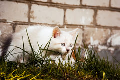 Kitten. Kitty examines green grass against the wall Royalty Free Stock Photos