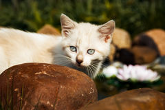 Kitten. Kitty is sitting on a stone Royalty Free Stock Images