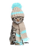 Kitten in knitted scarf and hat Royalty Free Stock Photography