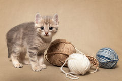 Kitten and knitting Royalty Free Stock Image