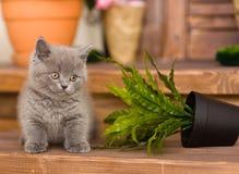 Kitten knocked over flower pot Stock Images