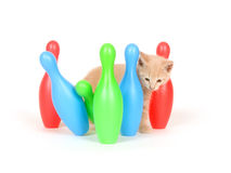 Kitten knocking over bowling pins Royalty Free Stock Image