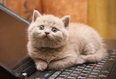 Kitten On A Laptop Stock Images