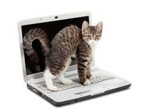 Kitten and the laptop Stock Photography
