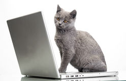 A kitten and a laptop Stock Image