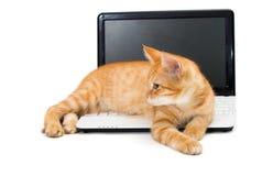 Kitten on the laptop Stock Photos