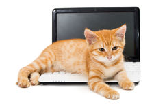 Kitten on the laptop Royalty Free Stock Photo
