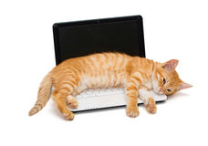 Kitten on the laptop Royalty Free Stock Images