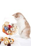 Kitten and large cognac glass Stock Photography