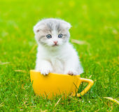 Kitten in large cup on green grass Royalty Free Stock Image
