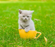 Kitten in large cup on green grass Royalty Free Stock Photos