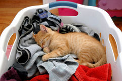Kitten laundry Stock Images