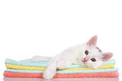 Kitten laying on colorful towels stock image