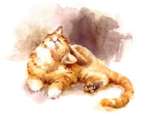 Kitten Laying Down Scratching linda su animal doméstico principal Tabby Cat Portrait Illustration Hand Painted de la acuarela Fotos de archivo