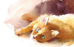 Kitten Laying Down Watercolor Pet sveglia Tabby Cat Portrait Illustration Hand Painted Immagine Stock Libera da Diritti