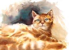Kitten Laying Down Watercolor Pet sveglia Tabby Cat Portrait Illustration Hand Painted Immagine Stock