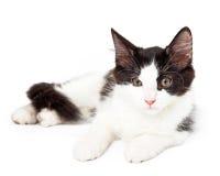 Kitten Laying Looking Just Off noire et blanche au côté image stock