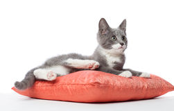 Kitten is laying on pillow. Stock Photo