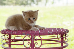 Kitten laying on pink stool Royalty Free Stock Photo