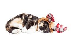 Kitten Laying Wearing Reindeer Antlers Lizenzfreie Stockbilder