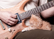 Kitten lays on man's lap who playing a guitar. Red shaggy kitten lays on his knees men playing the guitar royalty free stock photos