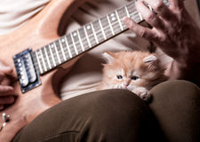 Kitten lays on man's lap who playing a guitar. Red shaggy kitten looks forward to the background of men playing the guitar stock images