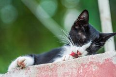 Cats lick themselves to clean the background. Kitten lick themselves clean in the background Stock Photography
