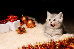 Kitten licking mouth and christmas decorations Stock Photography