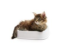 The kitten lies in a bowl Stock Photos
