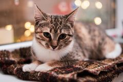 The kitten lies on a brown scarf on the windowsill by the window. Bokeh from garlands on the background