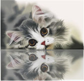 The kitten lies on glass Stock Photos