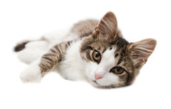 Kitten lies on one side Royalty Free Stock Photography