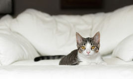 Kitten Lies on White Couch Royalty Free Stock Photos