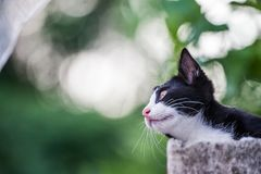 Close up to kitty cat like wondering all around in the background. Royalty Free Stock Photography