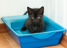 Kitten in litter tray Royalty Free Stock Photos