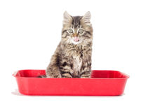 Kitten in the litter Stock Image