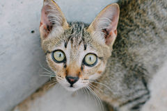Cat. Little cat, kitten, cats eye Stock Images