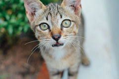 Cat. Little cat, kitten, cats eye Royalty Free Stock Photography