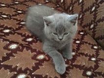 Kitten. Little cute kitten Royalty Free Stock Photos