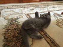 Kitten. Little cute kitten His name is Stock Images