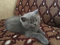 Kitten. Little cute kitten His name is Stock Image