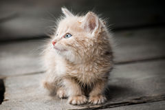 A kitten Royalty Free Stock Photography