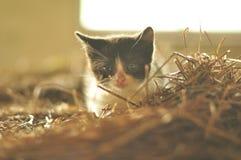 Kitten. stock photography